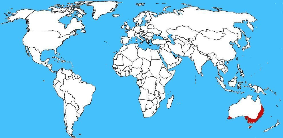 Mappa diffusione Myrmecia pilosula - Formica saltatrice